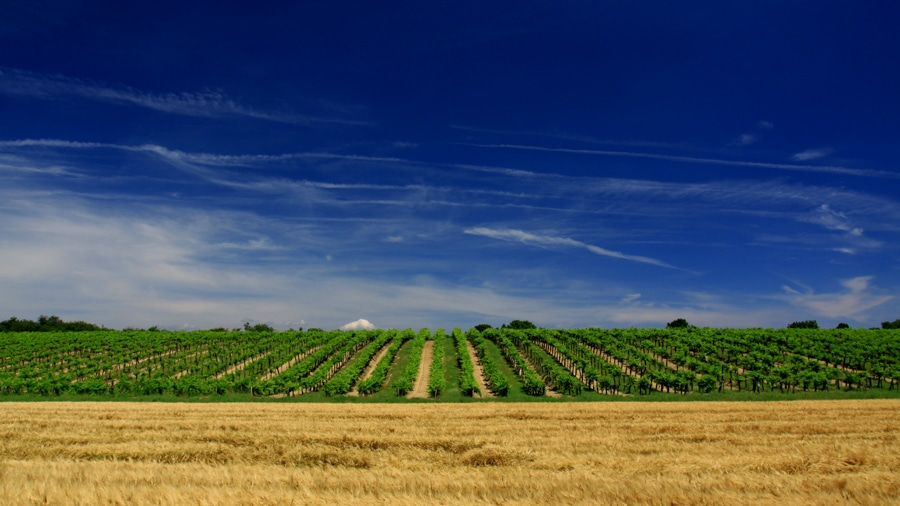 Fields for commercial production in Hungary