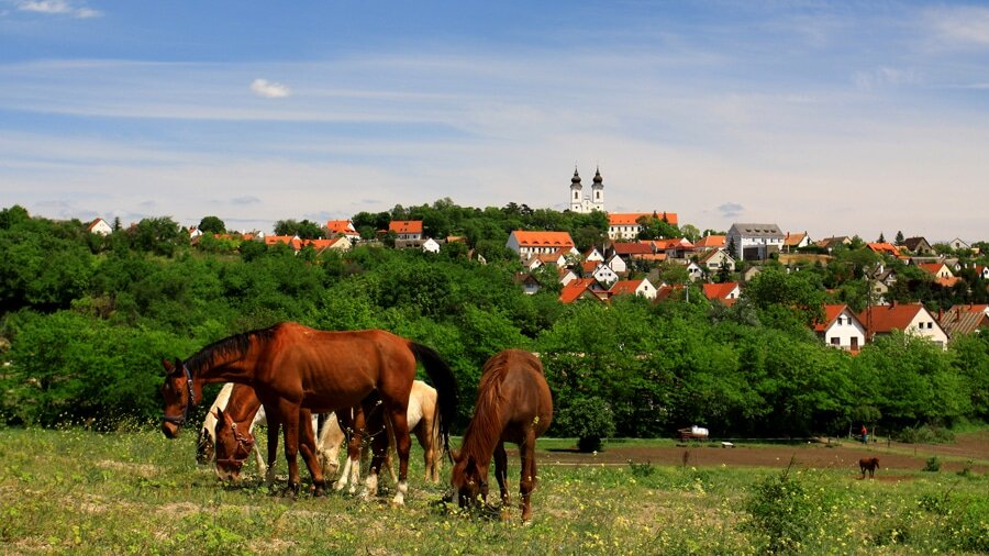 Riding stable for film production in Hungary